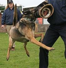 Shadowquest Dog Display